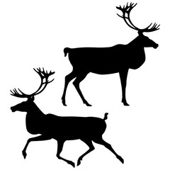 Black silhouettes of standing and running caribou isolated on white background. Vector illustration EPS 8