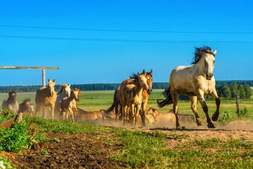 herd of horses running on the field