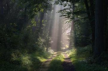 Leśne promienie