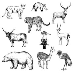 Set of hand drawn sketch style animals and birds isolated on white background. Vector illustration.