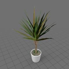 Tropical house plant