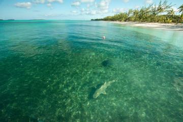 Shark at Bahamas