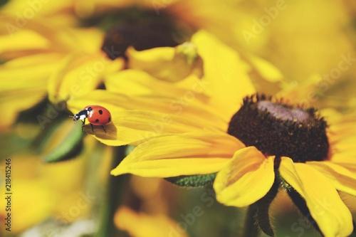 Marienkäfer Auf Blume Glückwunschkarte Stockfotos Und