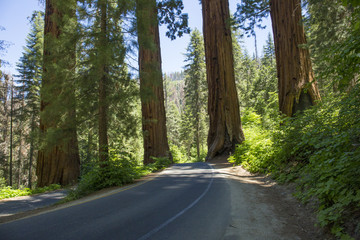 Sequoia National Park Road. California, United States.