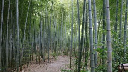 愛知 緑地公園 夏 日中 竹 竹林 小径 ハイキングコース 未舗装