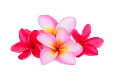 frangipani tropical flower, plumeria, Lanthom, Leelawadee flower isolated white background
