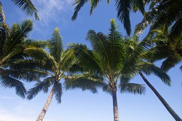 Tropical palm tree 5