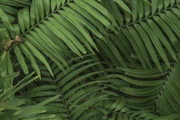 Leaf palm green
