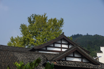 A Close-up of Roof and Green Trees in the Mountain Area