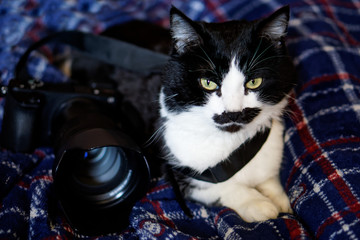 Cat-photographer. Lovely cat on a blue plaid next to a digital camera.