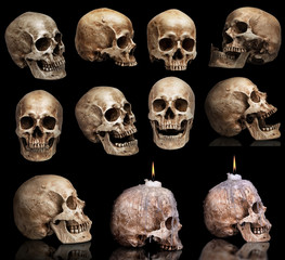 set of human skulls in different angles. Isolated
