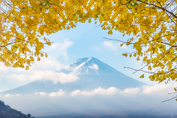 Mount Fuji with yellow leaf ginkgo in morning at Kawaguchiko lake