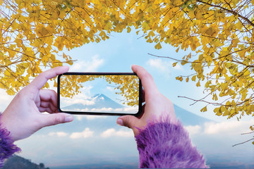 Woman hand take a photo mount fuji with ginkgo leaves by smartphone