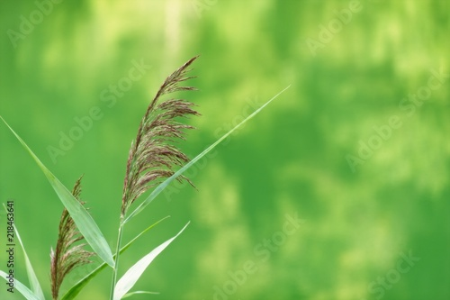 Bellissimo Background Astratto A Tema Natura Di Colore Verde Con