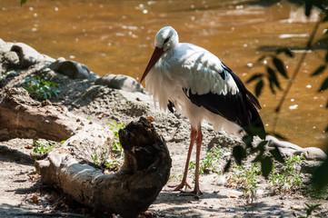 A mysterious stork