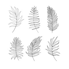 Set of palm,  jungle , tropical  leaves silhouettes isolated on
