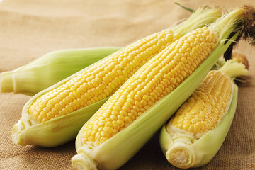 とうもろこし Fresh yellow corn Fototapete