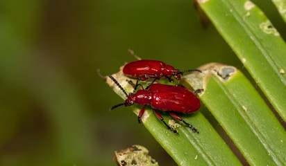 Macro shot of red beetle on nature background