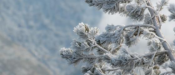 Frozen tree, Arbol congelado (Navacerrada, Spain)