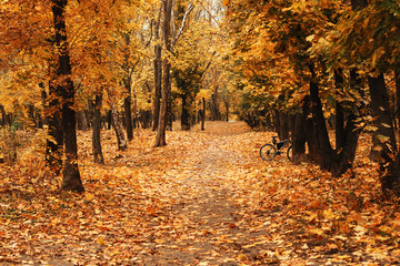 Empty road at the autumn forest or park covered with yellow fallen leaves. There are no people, but there is a lonely bicycle visible among trees.
