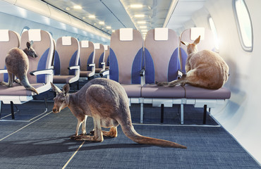 Deurstickers Kangoeroe kangaroo in the airplane cabin interior.