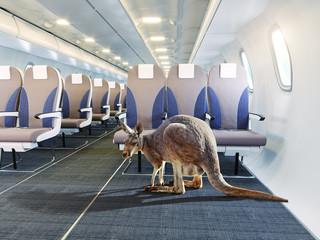 kangaroo in the airplane cabin interior.