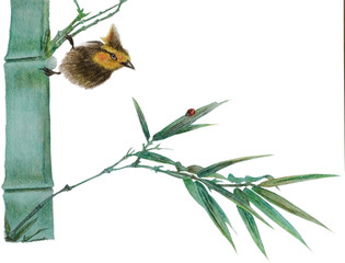 A watercolor illustration shows a bird and a beetle on a bamboo branch. Illustration executed in chinese style, isolated on white background.