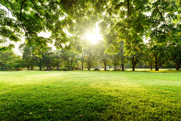 Beautiful landscape in park with tree and green grass field at morning. Fototapete