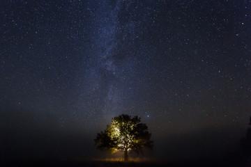 Single oak tree under starry sky at night