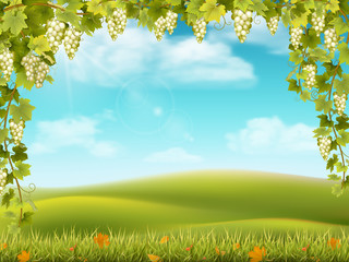 Bunches of grapes like frame on the background of the rural landscape with valley, hills and sky. Vector illustration about the harvest and winemaking.