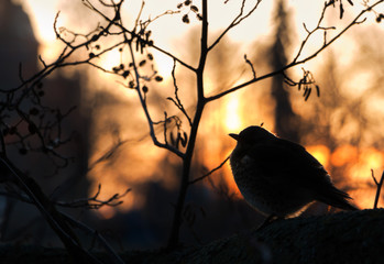 Silhouette of bird perched in tree at sunset