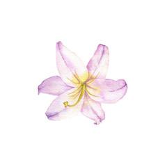 watercolor drawing flower