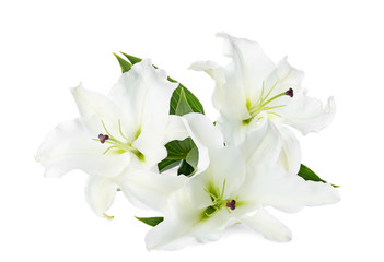 Beautiful lilies on white background. Funeral flowers
