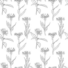 vector seamless pattern with drawing cornflowers