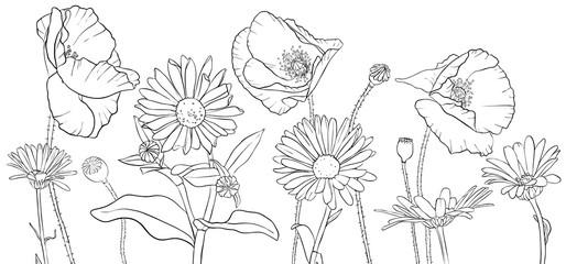vector drawing poppies and daisy flowers