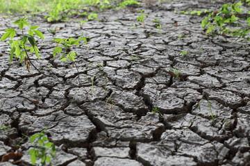 Vertrockneter Boden
