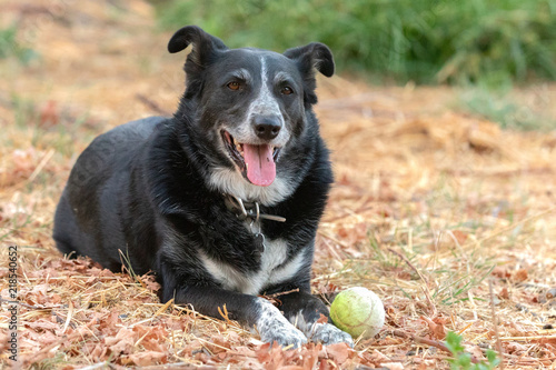 Border Collie With Tennis Ball Stock Photo And Royalty Free Images