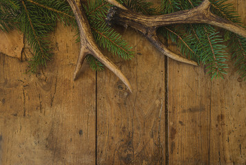 Beautiful deer antlers and fir branch on old wooden background with copy space for text