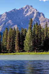 Fur Trees along Bow River with Mountains in Banff, Alberta, Canada