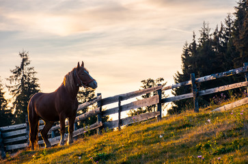 rufous horse near the wooden fence. beautiful evening scenery in golden light. forested countryside in mountains