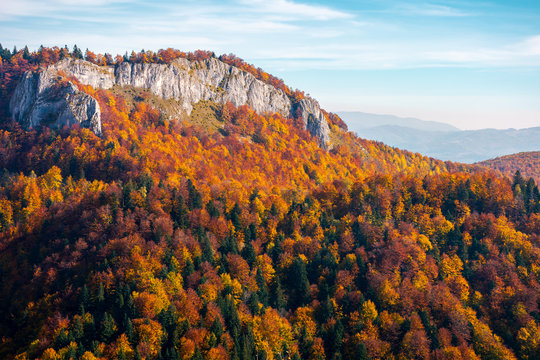 rocky crag in evening light. beautiful autumn scenery with fall color foliage in forest