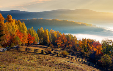 rural field and orchard in autumn at sunrise. mountainous countryside with fog in distant wally