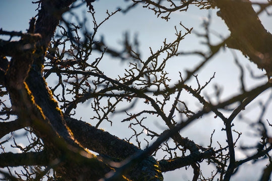 leafless apple tree branches. natural autumn background with shallow depth of field
