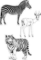 set of vector drawings of various animals, hand-drawn ink
