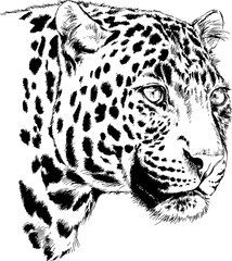 big leopard painted with ink by hand on a white background logo predator