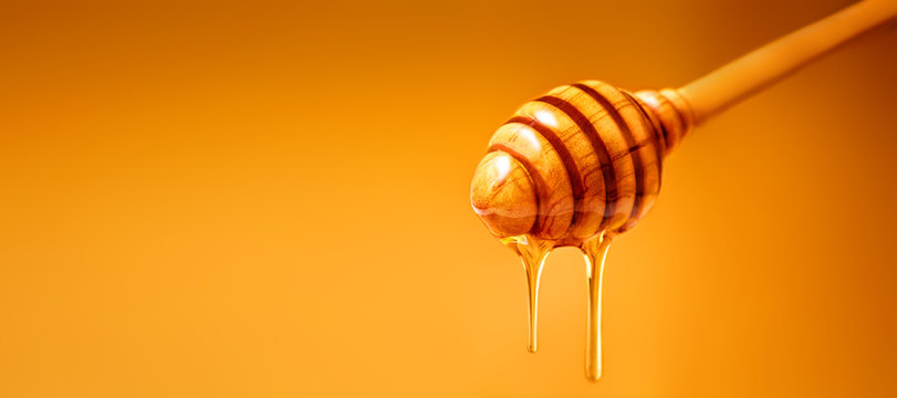 Honey dripping from wooden honey dipper over  yellow background. Sweet bee product for your design with copyspace. .