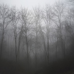 Moody dramatic foggy forest landscape Spring Autumn Fall
