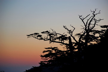Sunrise with silhouette of trees in the mountains in Spring in Taiwan