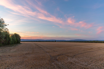 Sonnenuntergang in den Feldern Rheinhessens