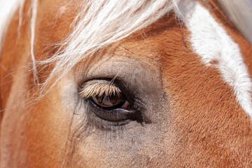Nahaufnahme eines Pferdeauges von einem Fuchs Pferd